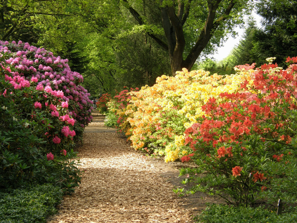 Germany 2010/Park der Garten Bad Zwischenahn/P5239011_Park_der_Garten_alppiruusut_ja_atsaleat