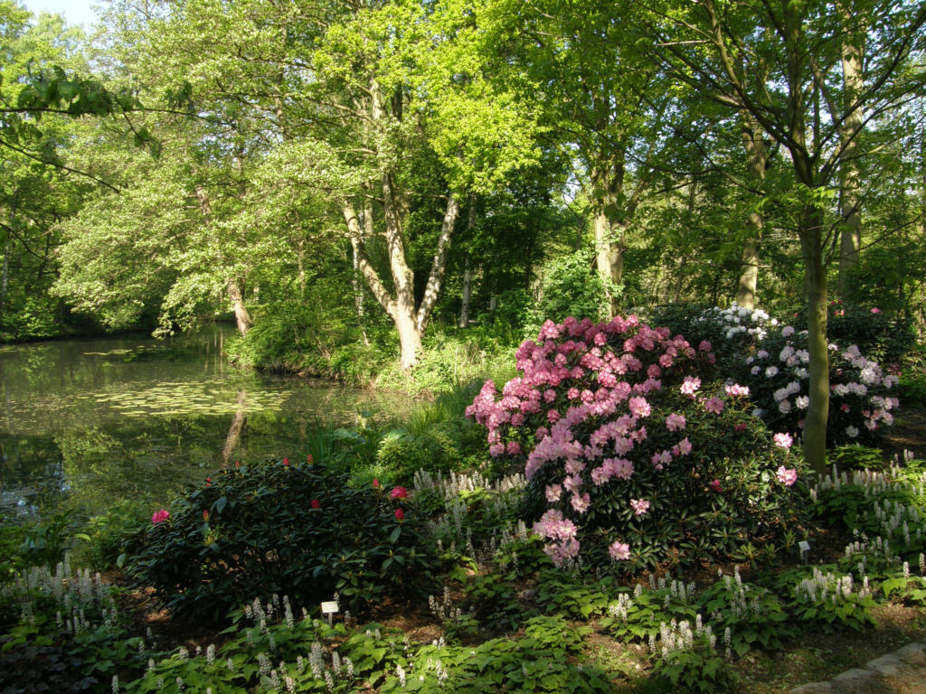 germany 2010 rhododendron park bremen p5218493. Black Bedroom Furniture Sets. Home Design Ideas