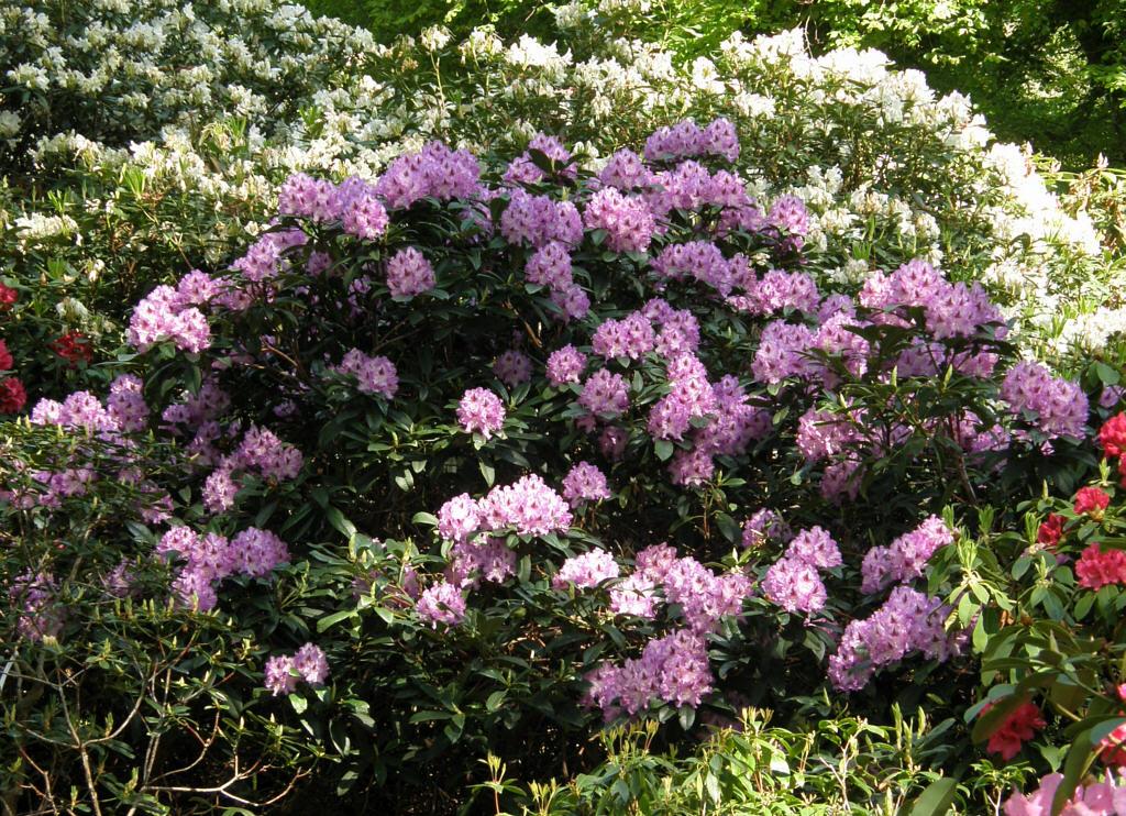germany 2010 rhododendron park bremen p5218515 blue ensign. Black Bedroom Furniture Sets. Home Design Ideas