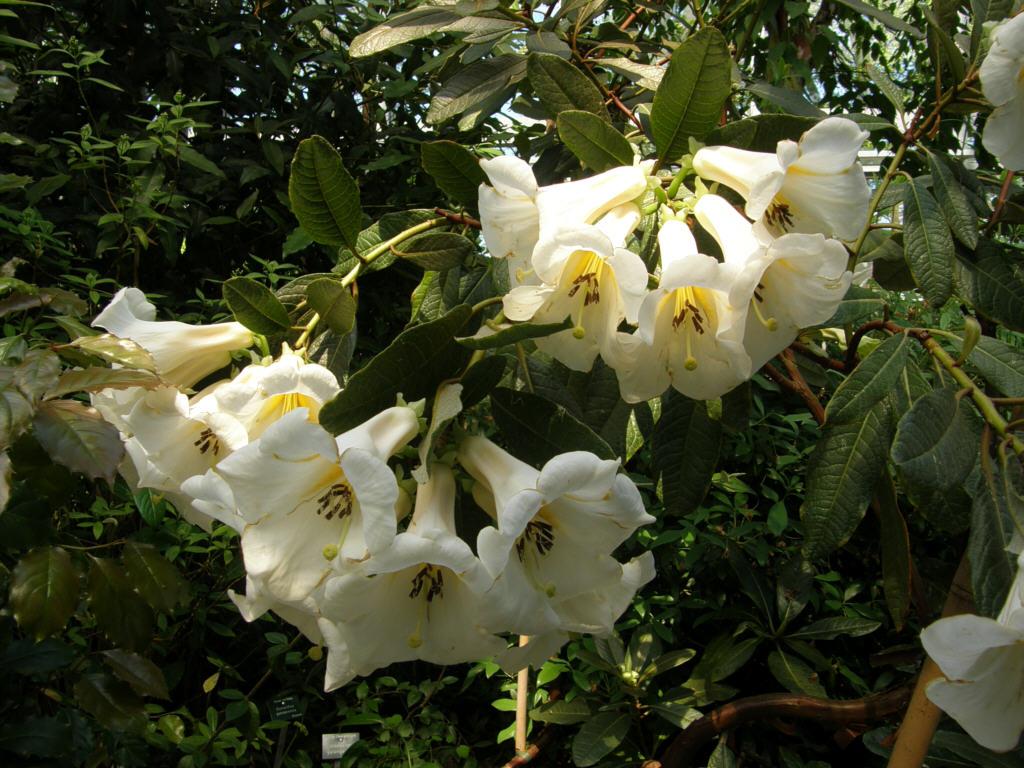 germany 2010 rhododendron park bremen p5218568 excellens. Black Bedroom Furniture Sets. Home Design Ideas