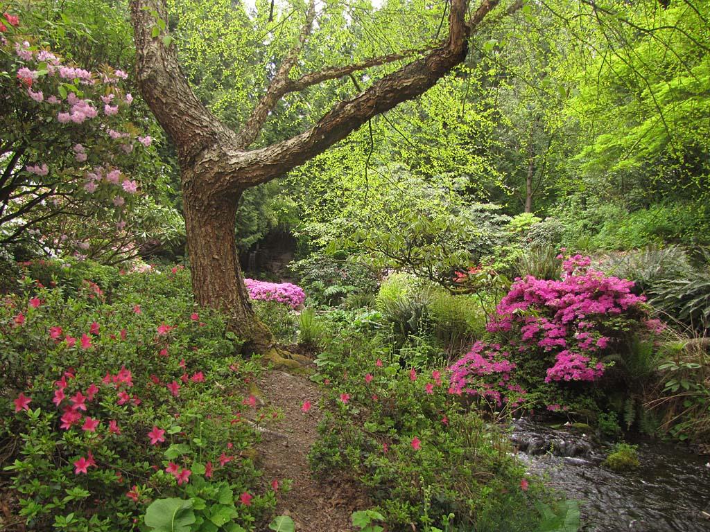 Usa and canada 2013 crystal springs garden 130428 img 8636 crystal springs garden for Crystal springs rhododendron garden